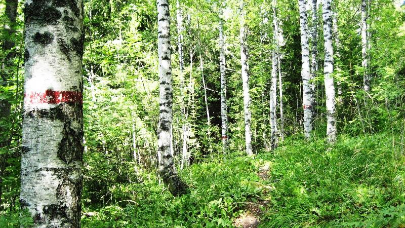 Bergvikin luontopolku