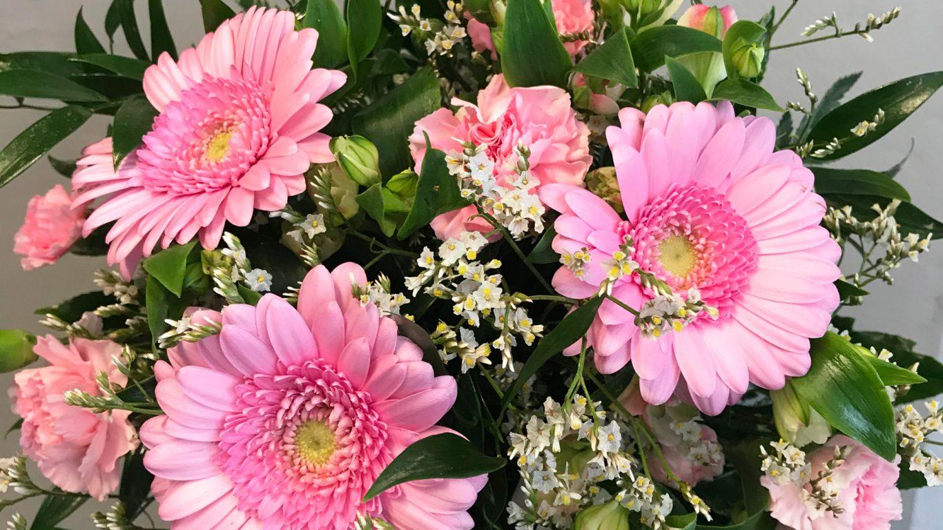 Kauniita vaalenapunaisia kukkia, gerberoita