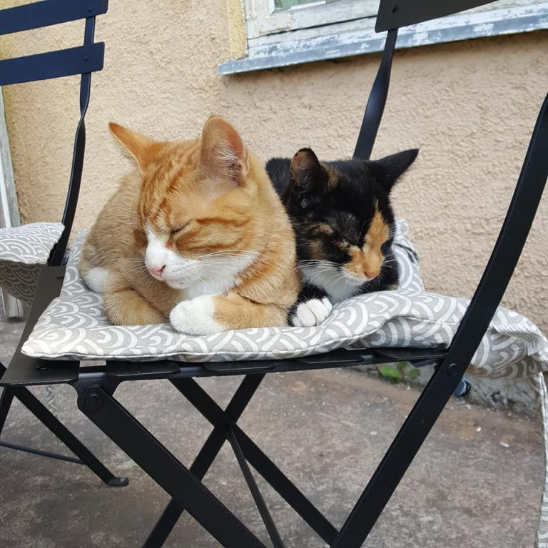 Matildankartanon kissat Frida ja Vincent seikkailevat puutarhassa ja ottavat välillä nokoset