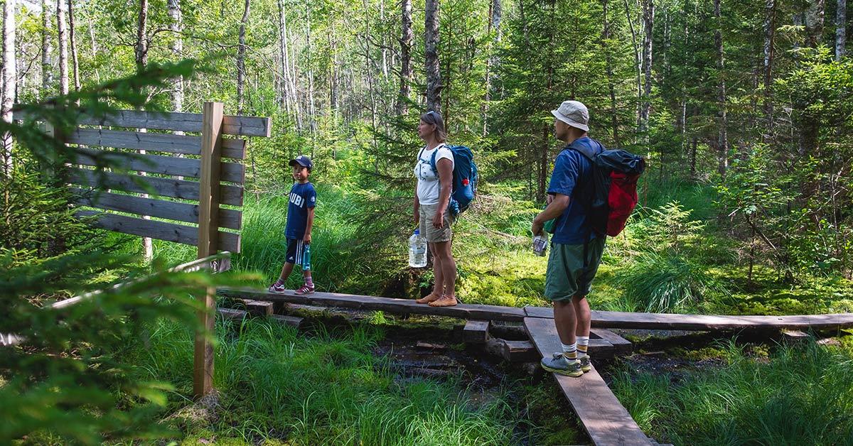 Patikoimme retkellä Teijon kansallispuistossa.
