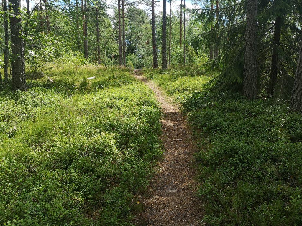 Polku Lehmijärven retkeilyreitillä